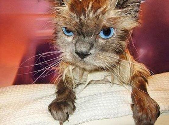 Gone is the lovable kitten...