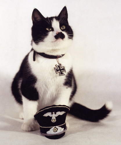 Kitten Hitler. Kitler.