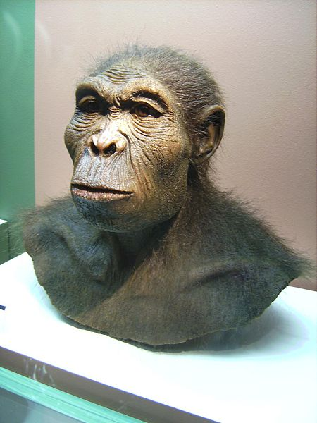 Homo habilis. Believe it or not, that's our oldest ancestor.
