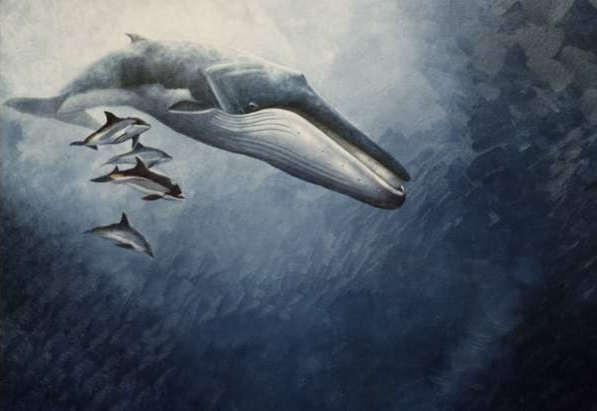 A fin whale with some dolphins! No idea on the original credit, sorry.