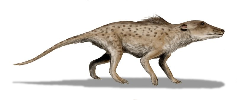 Pakicetus, of the packicetids, where whales originally evolved from! Ripped from Wikipedia.