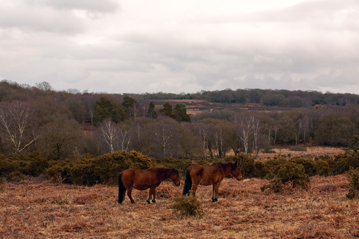 The horses of New Forest, near Burley (50mm landscape!)
