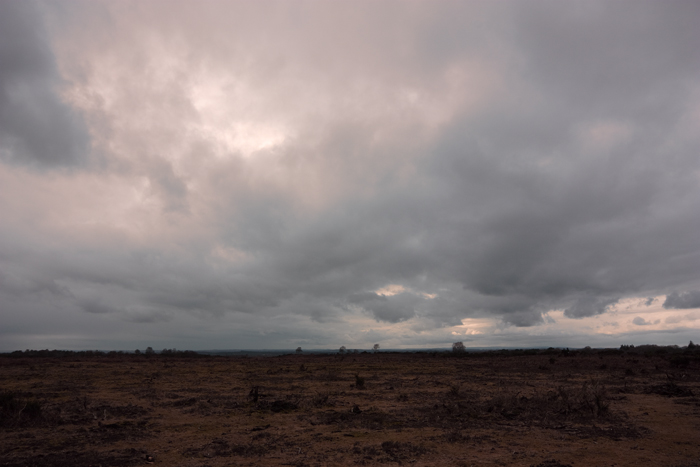 Another foreboding shot of the scrubby New Forest.