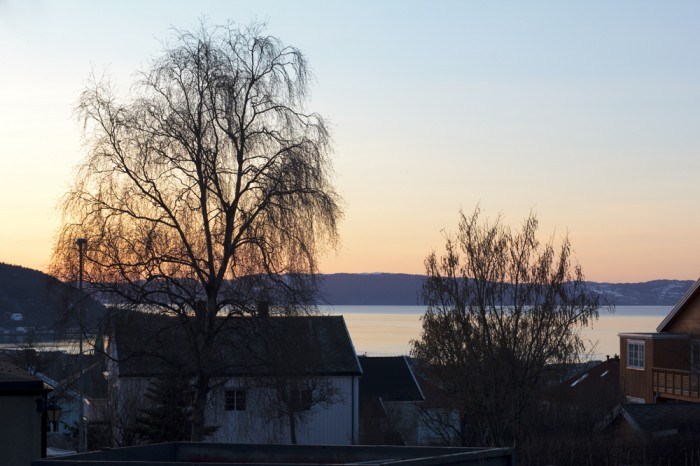 Trondheimsfjord... from behind some trees...