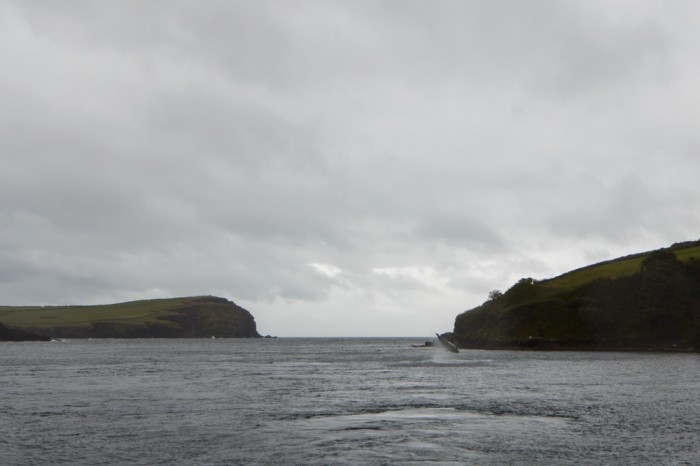 Fungie doing a flip, in Dingle Bay